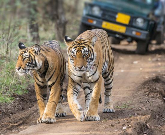Bangalore Luxury Travel - Palace On Wheels Indian Train Tour - Luxury Tours